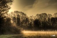 Biesbosch Merwerlanden Alblasserbos Vroege Ochtend