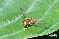 Insekten aan het werk