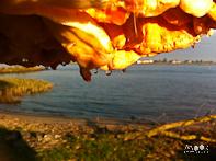 inspiratie herfst iPhone iPhonografie zwavelzwam