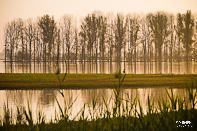 ochtend-in-de-Biesbosch