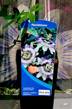 Passiebloem