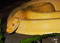 reptielen fotograferen