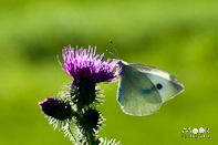 september ochtend dauw vlinder vlieg