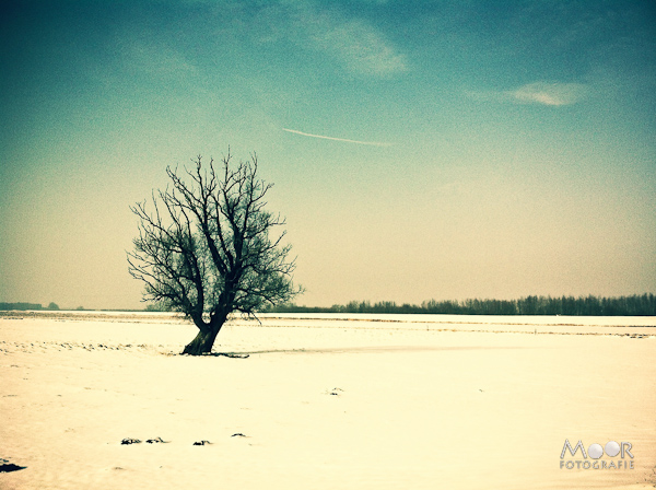 winter wonderland sneeuw stilte