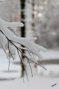winterfoto sneeuw