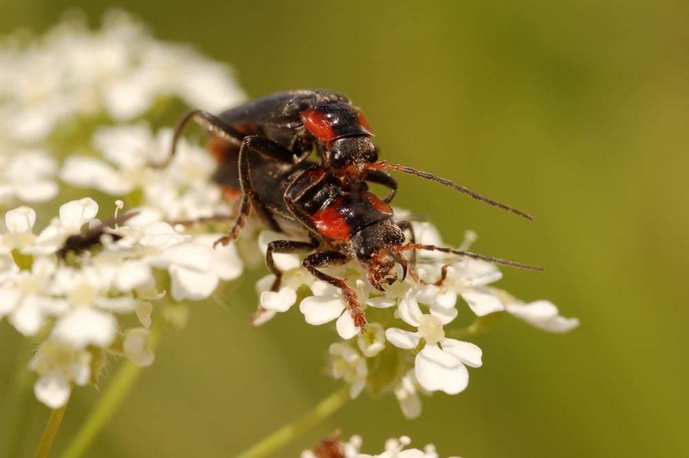 Wilgentuin deel 1: in Mei… zijn de insecten ook van de partij.
