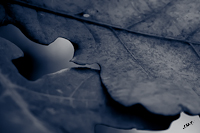 Biesbosch Herfst Paddenstoelen