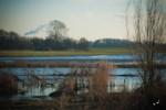 Even de Biesbosch in op zoek naar het voorjaar