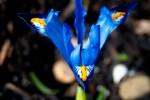 Straaltje lente
