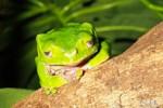 Reptielenhuis 'De Aarde'