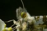 Vlindertjes zoeken