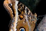 Nog een juweeltje van de Vlindertuin